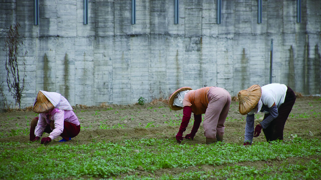 農村勞動力短缺,有機農業十分仰賴人工,例如除草時就需要調度鄰近鄉鎮的「阿婆工」來幫忙。