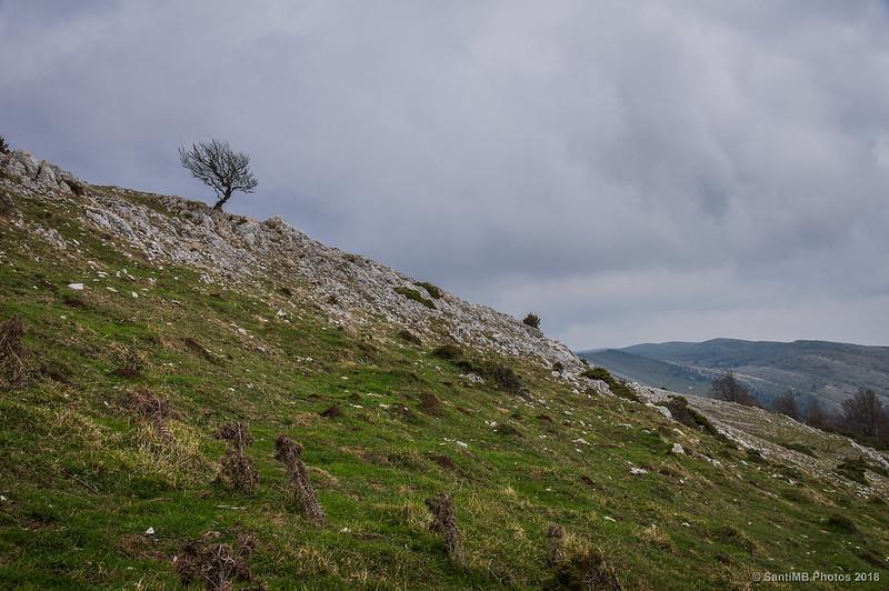 Árbol solitario en las crestas de Ollide