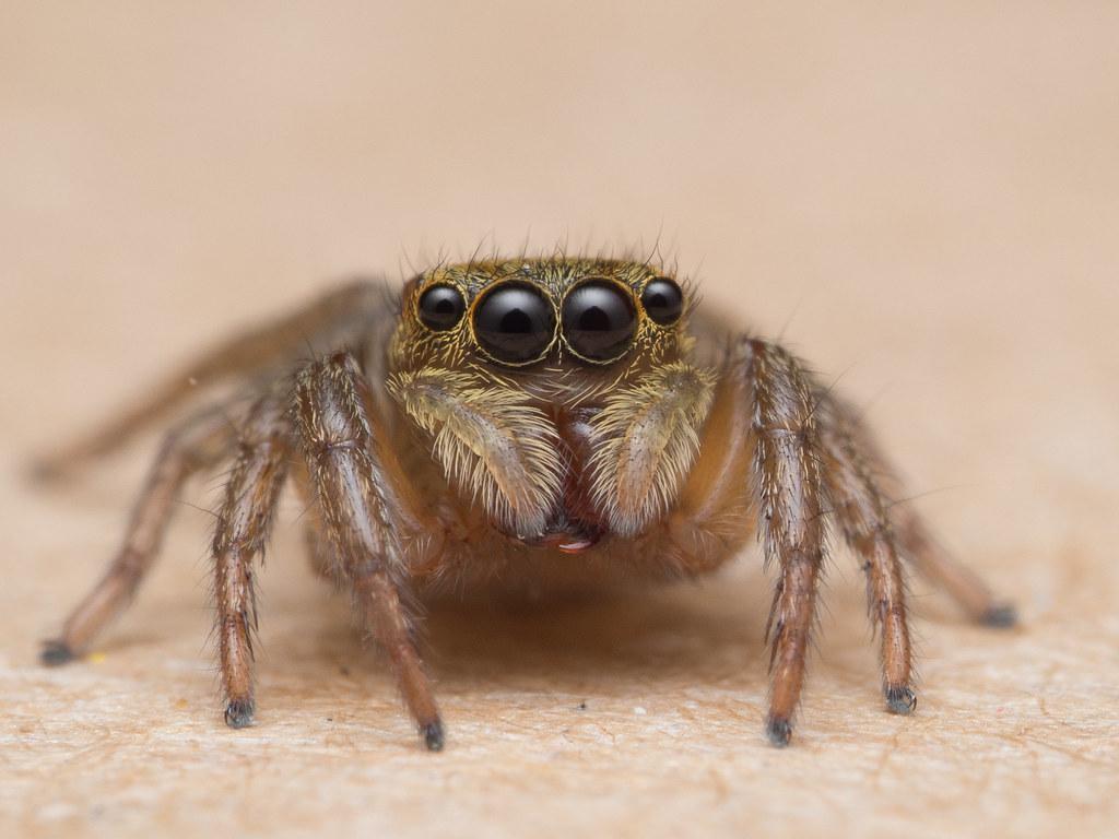 Lucas The Spider Olympus Digital Camera Adam Maniam Flickr