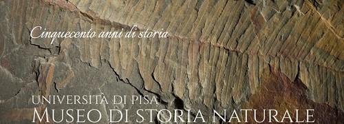 Museo di Storia Naturale Università di Pisa