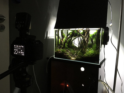 final shot ada 45p setup | by nigel_kh