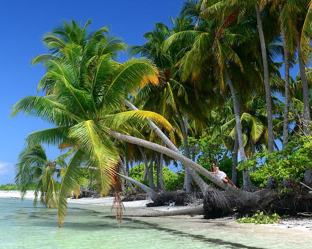 Abrazada a una palmera en una de las mejores playas donde ir en Maldivas