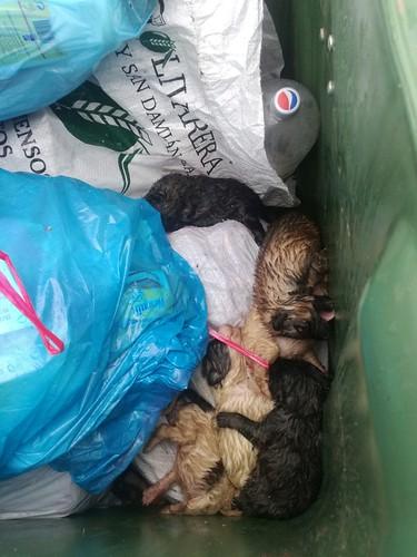 AionSur 39000208490_2c05cc9a38_d Contenedores de basura: última morada de los perros abandonados en El Saucejo El Saucejo