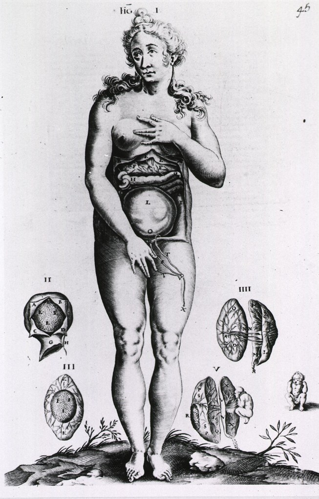 Obstetrics: Anatomy of female figure surrounded by vignett… | Flickr
