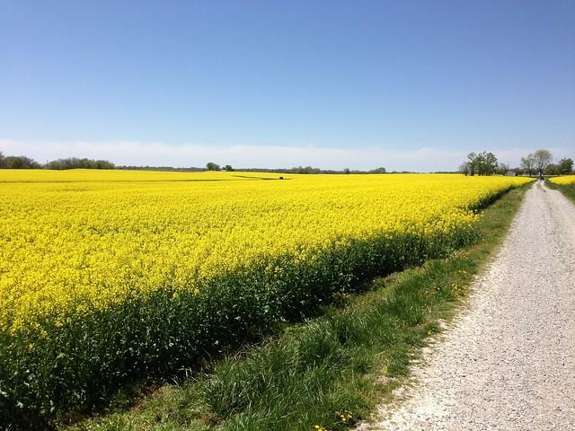 Mark Anson's cover crops