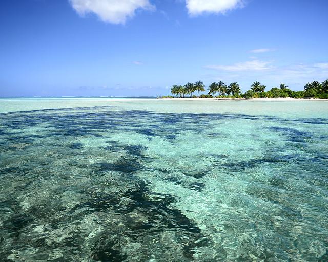 Aguas cristalinas repletas de corales con una isla al fondo en Maldivas
