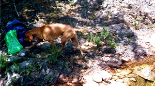 Le chien du Vivaghju au départ du canyoning