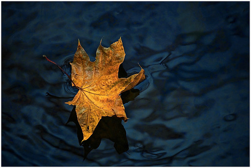 22 - Gold on Blue by William Ludemann | by Nature Camera Club