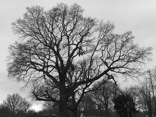 2018 03 11 tree branches b&w | by Wendrie