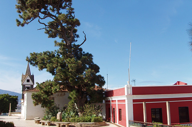 Centenary Pine, La Victoria, Tenerife