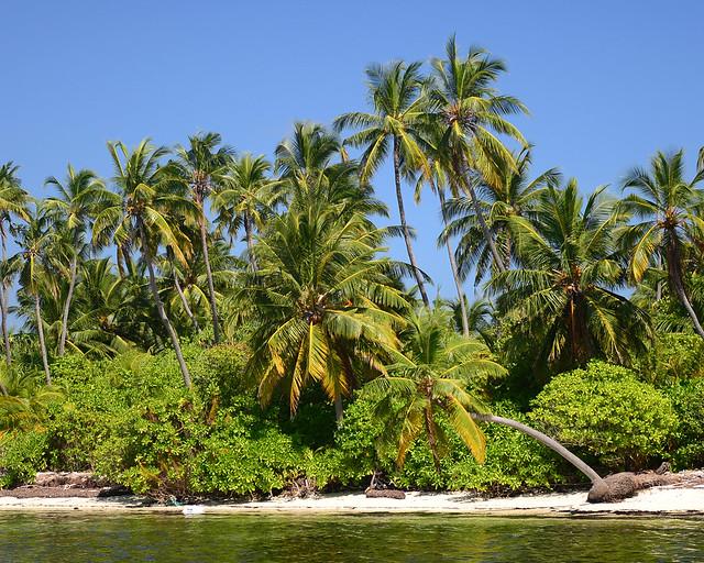 Palmeras sobre el agua en una de las mejores islas de Maldivas