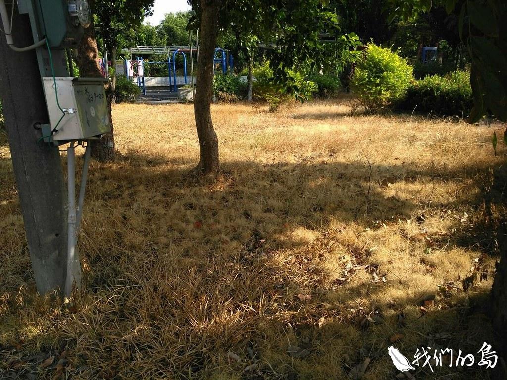 945-2-6一張張的枯黃照片,呈現的都是噴灑過除草劑的死寂。(照片提供 賴榮藏)