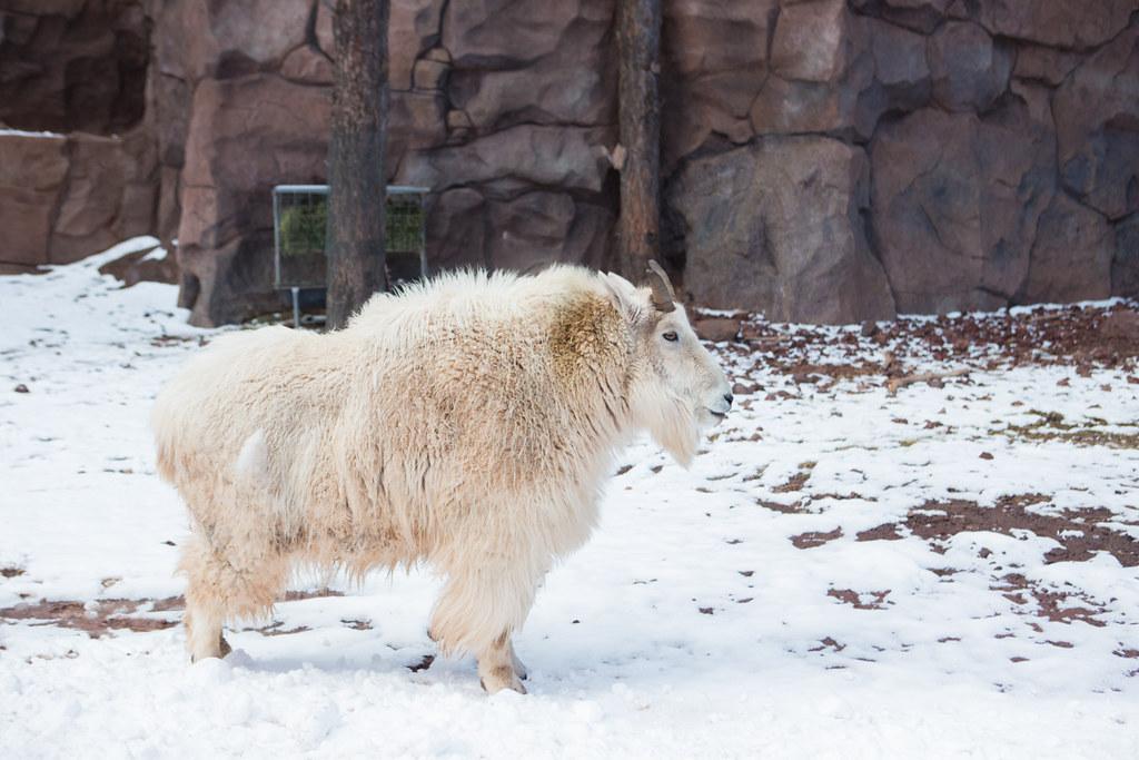 Bearizona drive through zoo