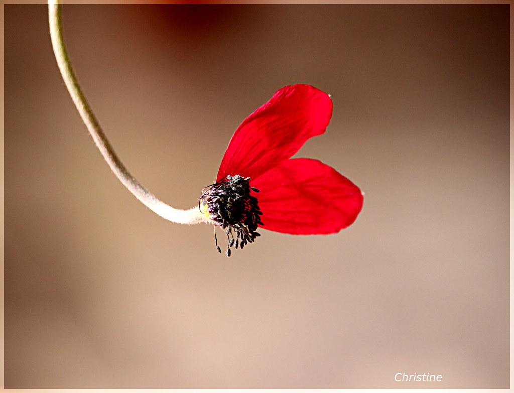 anatomy of a flower   christinehag   Flickr