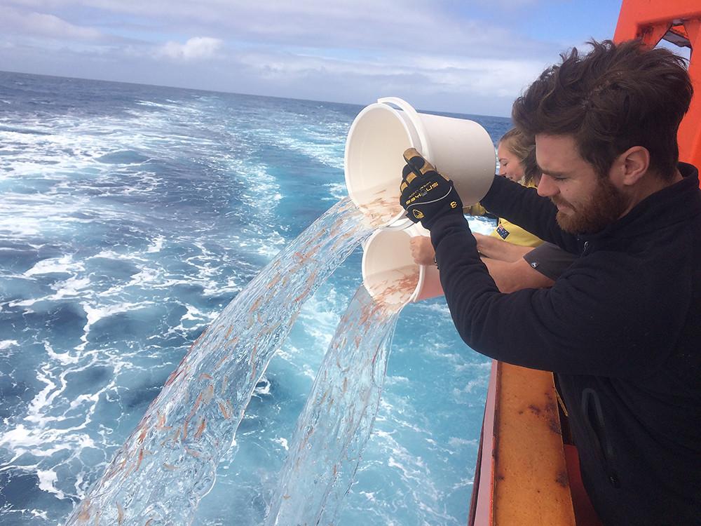 Krill-in-ocean