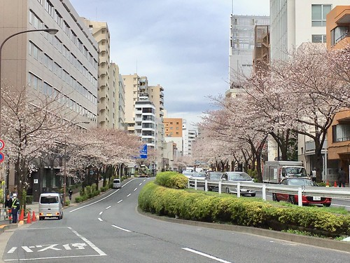 2018.3.23 桜 明治通り 恵比寿と広尾の間