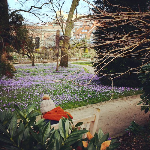 Early spring in the botanical garden of Leuven | by Kristel Van Loock
