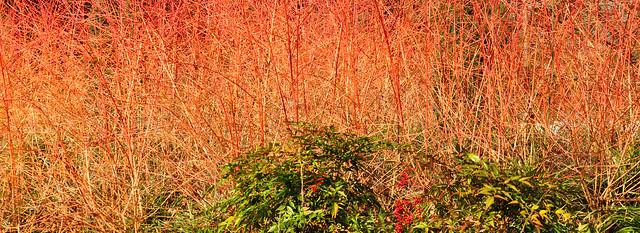 """Fotografisches Sammelsurium März 2018, Luisenpark Mannheim: kleine Frühblüher, gemütliches Kuscheln bei den Zebra-Mangusten, Frühstück im Café """"Pflanzenschauhaus"""", der Fernmeldeturm, noch unbelaubte Bäume ... Schon bald steht Ostern vor der Tür ... Foto: Brigitte Stolle"""