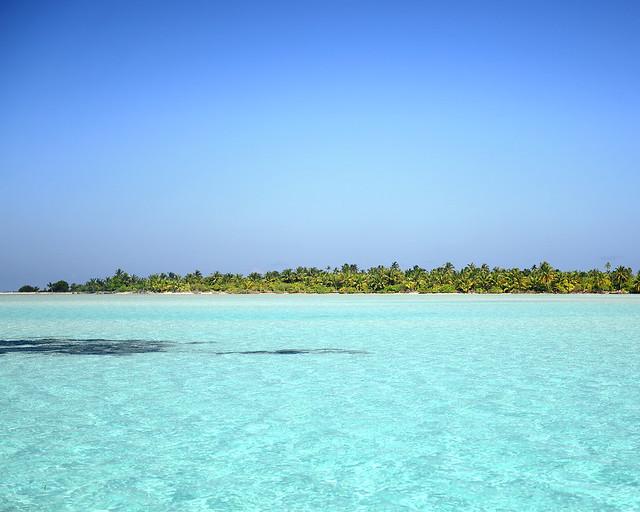 Palmeras en una isla virgen de Maldivas