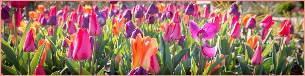 Atl botanical gardens gainesville ga 2127 when it - Botanical gardens gainesville ga ...