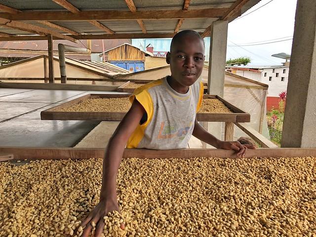 Niño jugueteando entre granos de café de la Roça Monte Café (Santo Tomé y Príncipe)