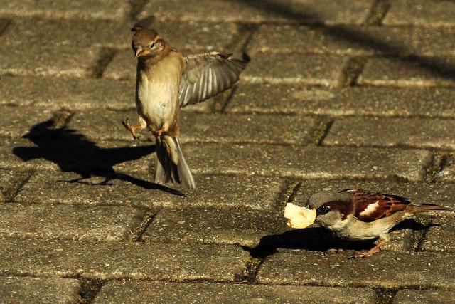 Vogelfotografie im Luisenpark Mannheim ... Shit happens - Merda fit - März 2018, Foto: Brigitte Stolle