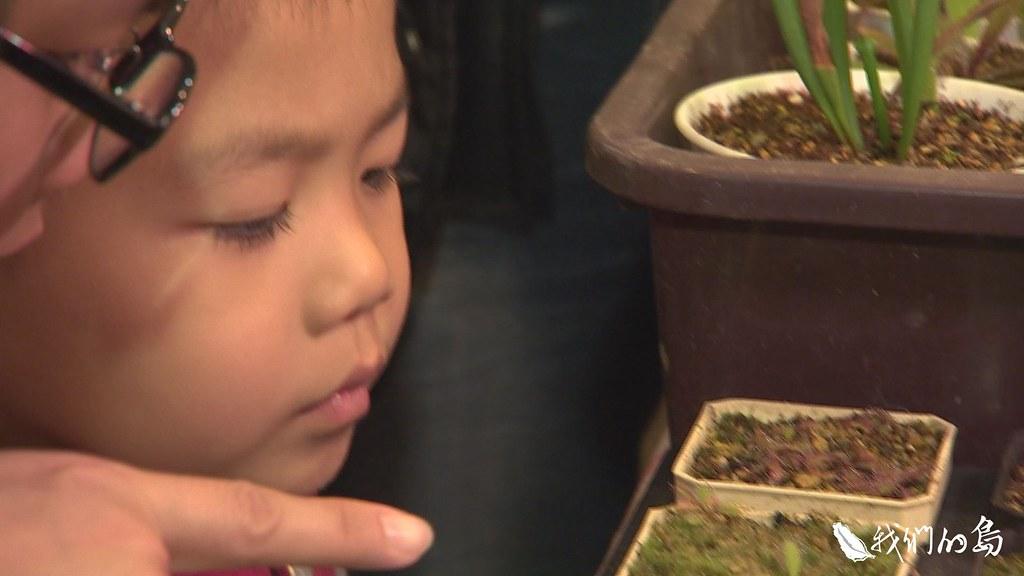 945-1-4建國花市這個攤位的食蟲植物,幾乎來自國外,很多人不知道,其實台灣也有食蟲植物。