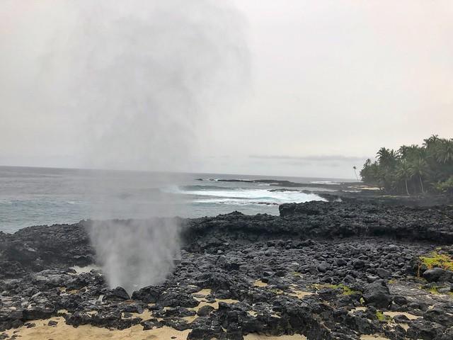 Bufón en isla de Rolas (Santo Tomé y Príncipe)