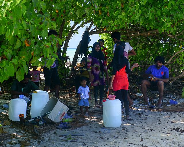 Maldivos metidos entre arbustos a la sombra