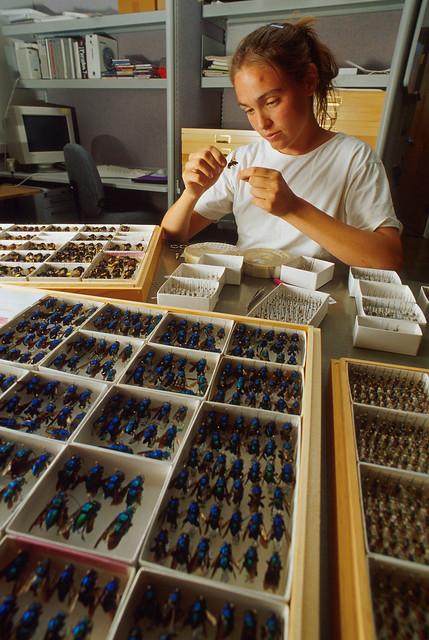 Technician Susana Messinger placing labels on samples