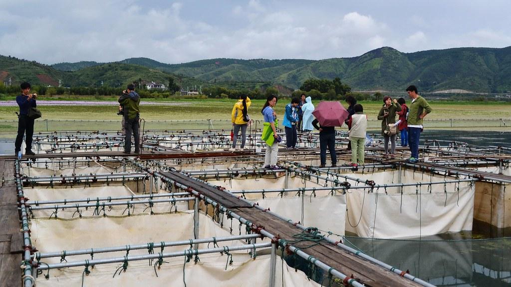 洱海生態豐富,中國政府設立工作站,進行水生植物的研究與保護。攝影:郭志榮