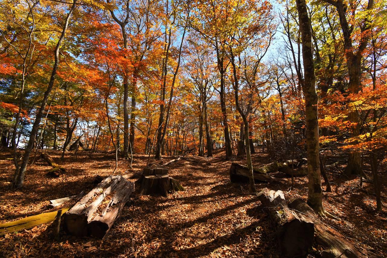 牛ノ寝通り 木のベンチと紅葉