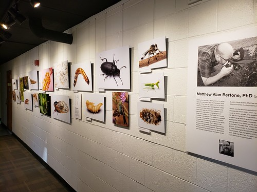 New photos of insects hang from wires against the wall; there is a placard with information about the photographer, Matt Bertone