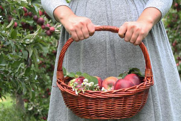 apple picking photo
