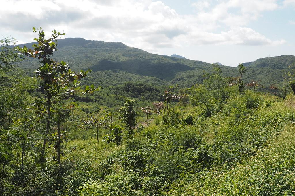 疏伐後保留部分樹木減少土壤裸露和侵蝕。攝影:李育琴