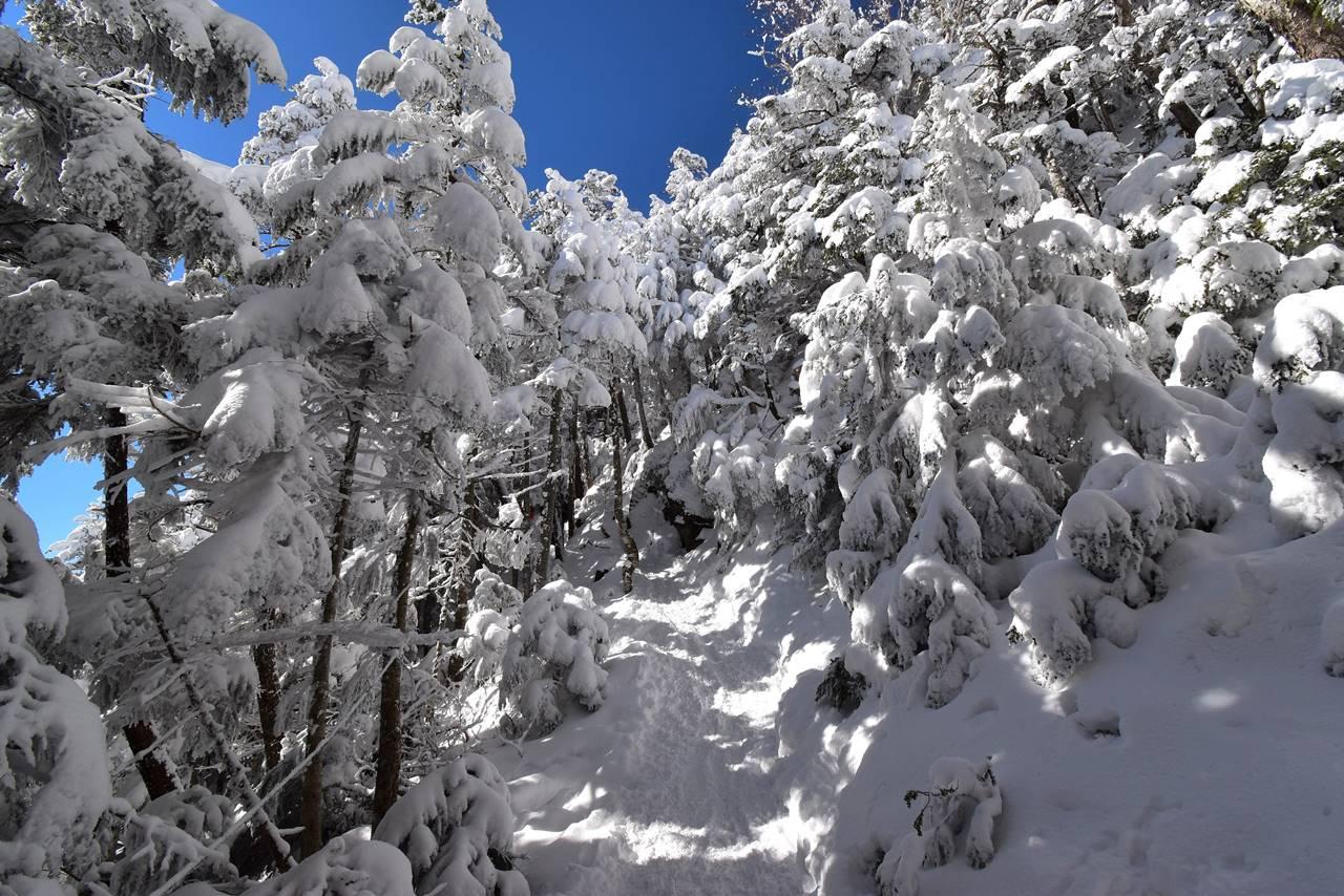 北横岳登山 雪の樹林帯