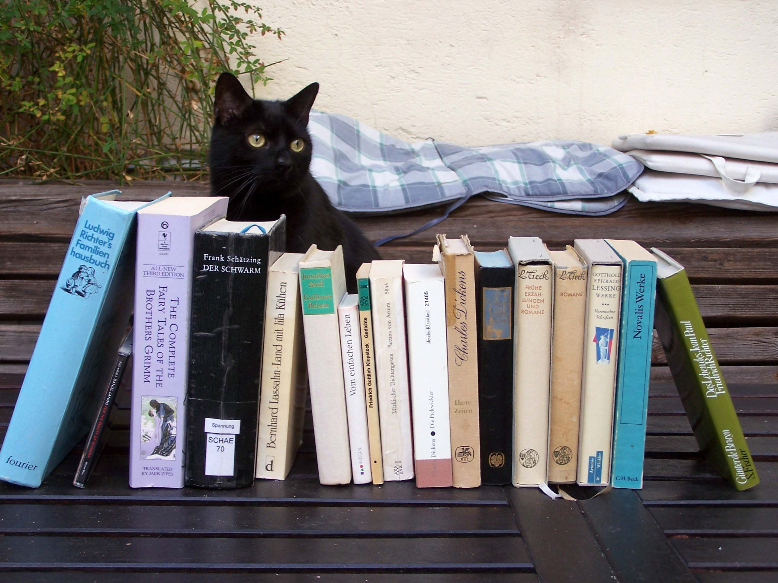 Merlin im Hof. Cats on Books 4, 6. November 2018