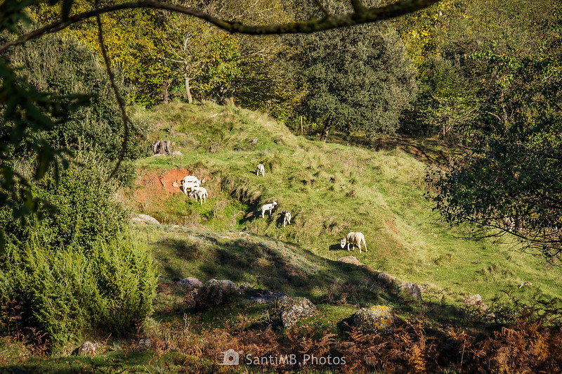 Pastos cerca de la carretera del Corb