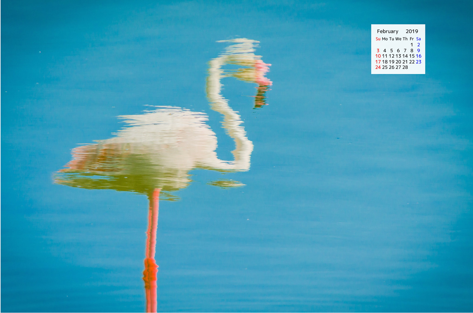 Free download February 2019 Wallpaper Calendar - Dubai Flamingo