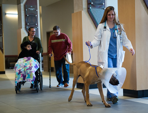 Veterinary student Kileigh Speed escorts Scooby to be discharged with his family.