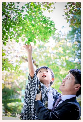 七五三 5歳の男の子とパパ モミジに手を伸ばす