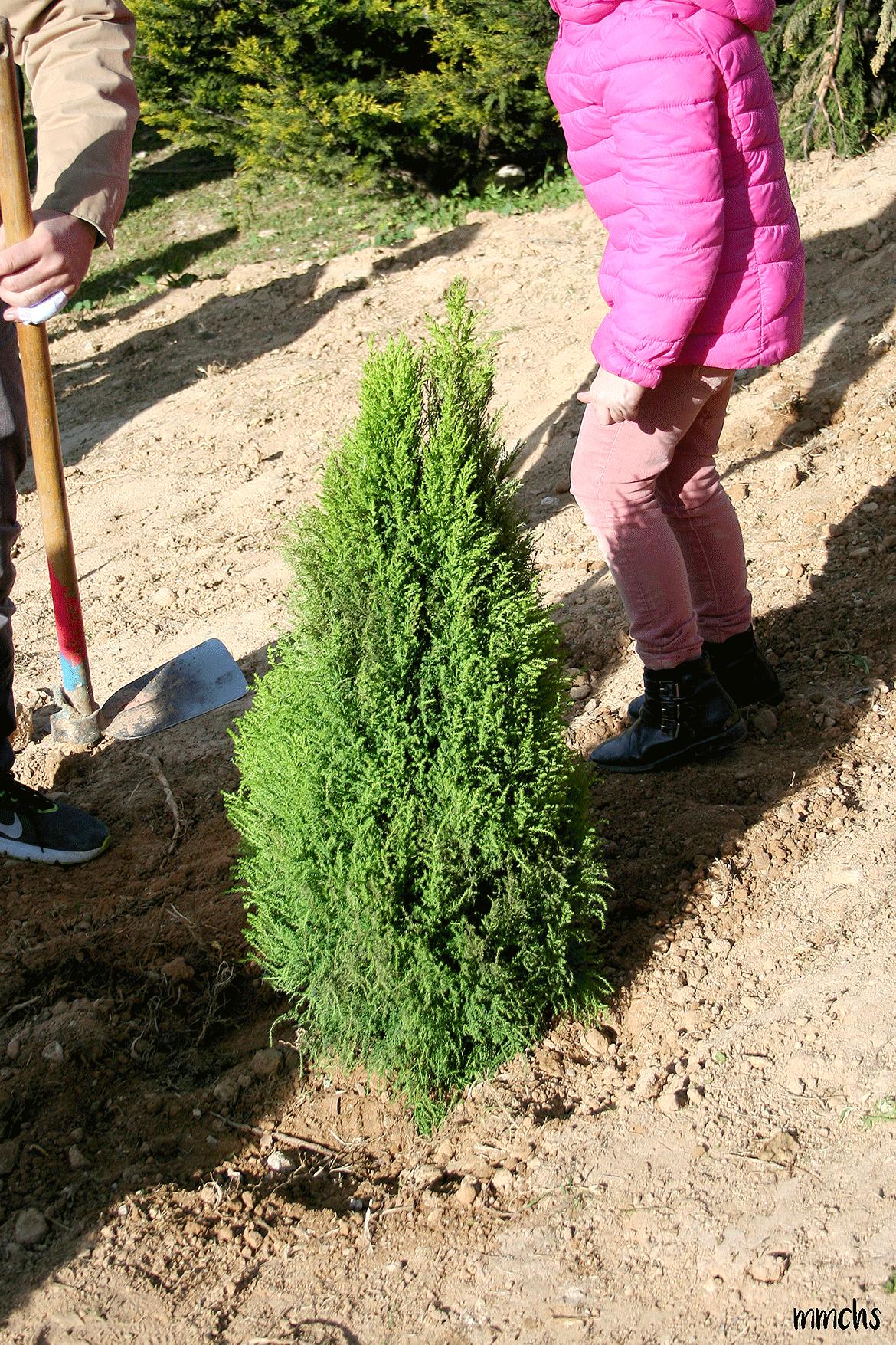 plantando un árbol con niños en Paterna