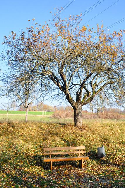 Bad Rappenau im November 2018 - Villa Rustica und Römersee - Foto: Brigitte Stolle