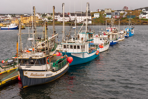 Bonavista Harbour | by gravelben