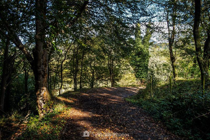 Bosc de l'Avellana