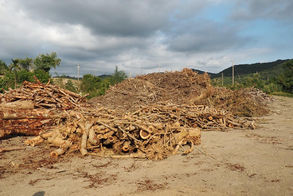 林木全利用,小徑木也運回,可做成木屑太空包。攝影:李育琴