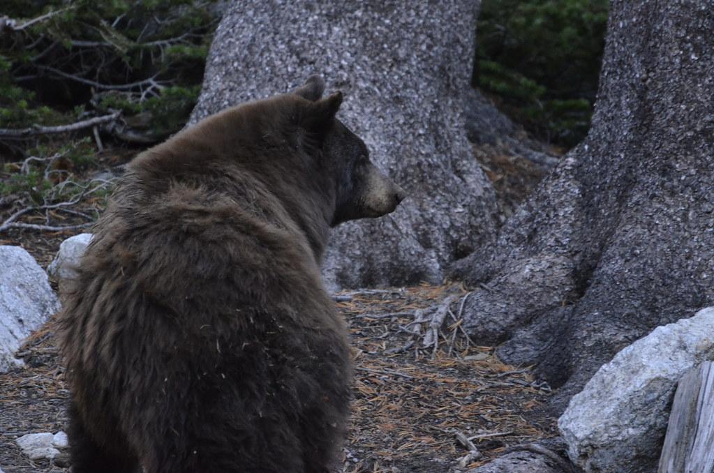 和熊相遇的那一刻