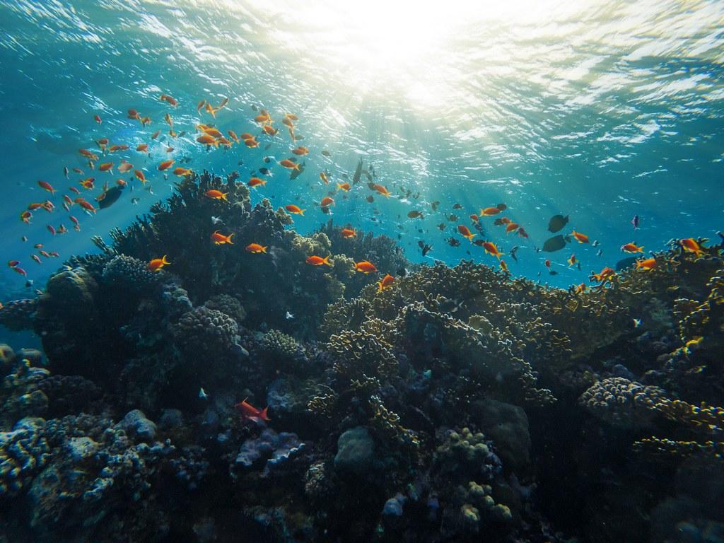 珊瑚礁生態系價值,估計每年每公頃約為35萬國際元。