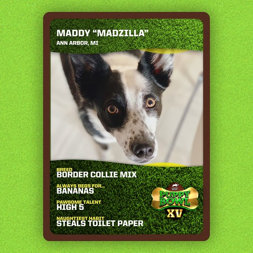 #puppybowl #puppybowlxv #bordercollie #bordercolliemix | by valatal