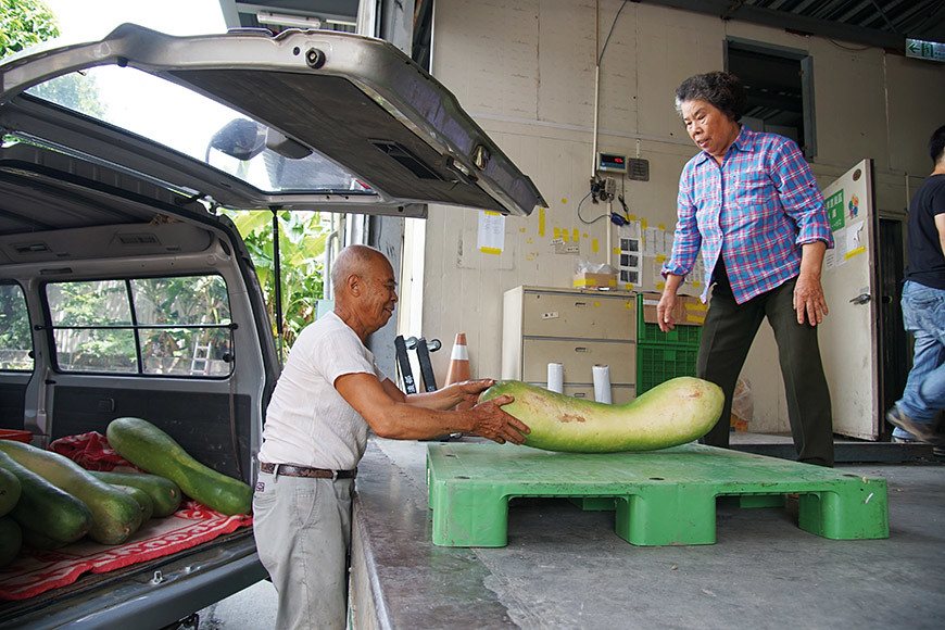 蔬菜收成時,謝金全夫婦每週兩次開著車到三重北倉送貨。這一天送來了大冬瓜,並用毛毯包覆著保護它們不受傷。